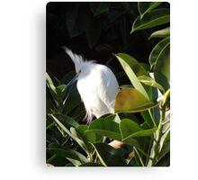 White Beauty - Belleza Blanca Canvas Print