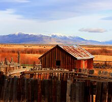 old barn n corral Winnemucca nevada area.. by DonActon