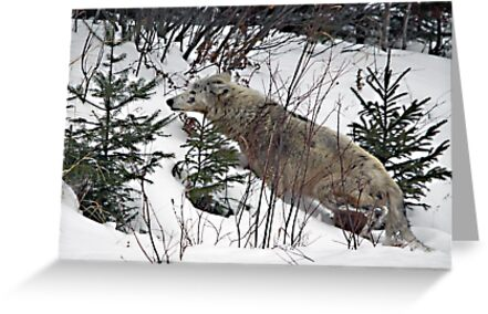 Totally In the Wild by Vickie Emms