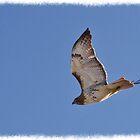 Fly away by greyrose