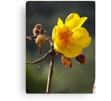 Dandelion - Botón De Oro Canvas Print