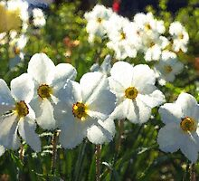 Poet Daffodils Dreams - Impressions Of Spring by Georgia Mizuleva