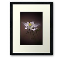 One White Columbine Framed Print