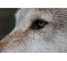 Eye of the wolf Photographic Print