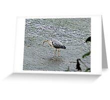 Heron with eel Greeting Card