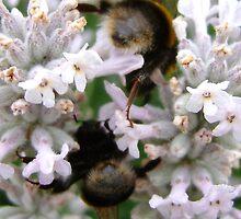 Bees Bottoms iPhone Case by Sarah Tweedie