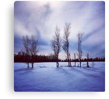 Beautiful Trees in Winter Canvas Print