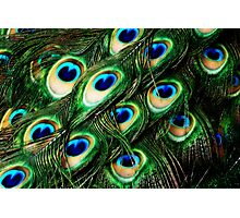 O Feathers Photographic Print