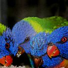 rainbow lorikeet by Loreto Bautista Jr.