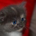 Ol Blue Eyes by KeepsakesPhotography Michael Rowley