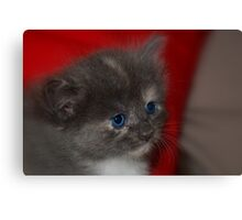 Ol Blue Eyes Canvas Print