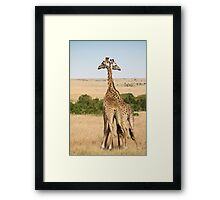 Maasai Giraffes. Two As One. Maasai Mara, Kenya Framed Print