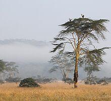 Morning Ritual in the Fog. Lake Nakuru, Kenya. by Carole-Anne