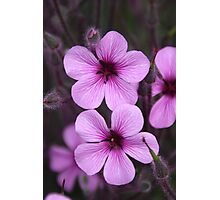 Pink Flowers & Buds Photographic Print