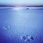 Dog Prints in Snow by Nadine Staaf