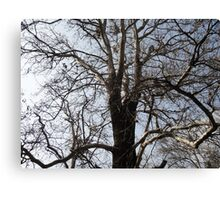 Old Tree Without Leaves Canvas Print