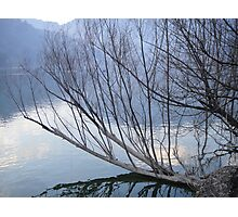 Drowned Tree In Lake Photographic Print