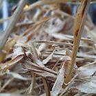 Wood Peel by Manish Yadav