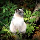 Siamese Meditation by Sharon Woerner