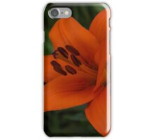 A Solo Daylily iPhone Case/Skin