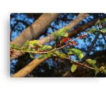 New red leaves Canvas Print