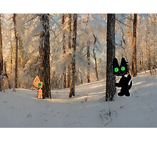 Cats Play Hide And Seek  Photographic Print