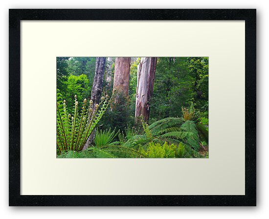 Mountain Ash and Tree Ferns by Bette Devine