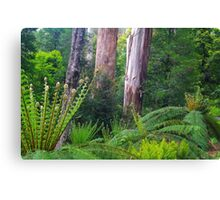 Mountain Ash and Tree Ferns Canvas Print