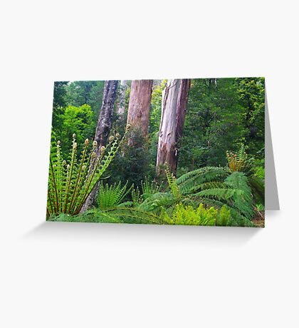 Mountain Ash and Tree Ferns Greeting Card