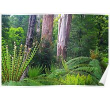 Mountain Ash and Tree Ferns. Poster