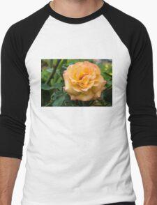 Early Summer Blooms Impressions - Elegant Peach Rose Men's Baseball ¾ T-Shirt