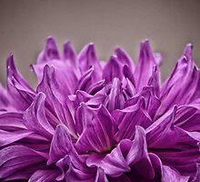 The Purple Crown by binoyshaw