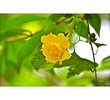 Tropical Gardens 9 Photographic Print