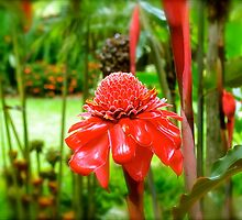 Red Torch Ginger Lily by Alison Hill