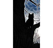 Stalker Kitty Photographic Print