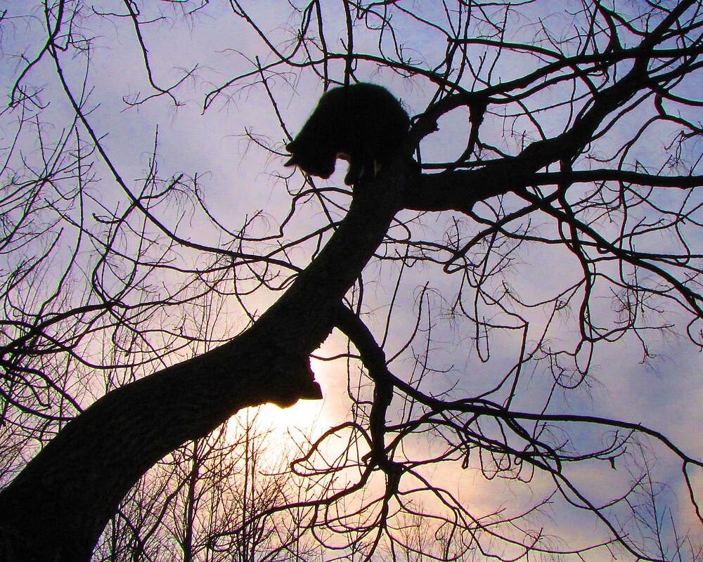 Sunset Kitty by nikspix