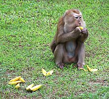 Hungry Monkey by jlv-