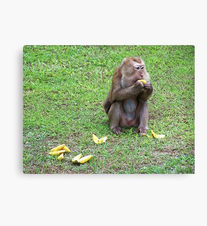 Hungry Monkey Canvas Print