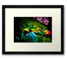 Daisy Evolution Framed Print