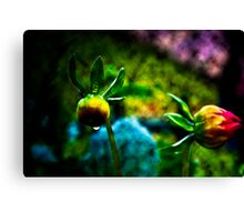 Daisy Evolution Canvas Print