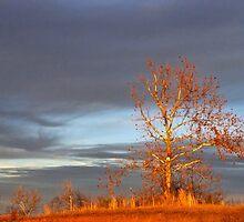 Winter Light by Carolyn  Fletcher