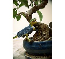 Bonsai Raptor Photographic Print