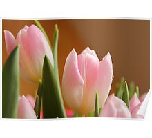 Tulips in a Bunch Poster