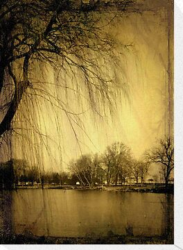 Weeping Willow © by Dawn M. Becker