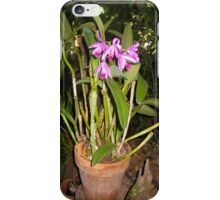orchid from my gardn iPhone Case/Skin