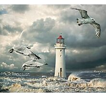 Gulls at Perch Rock Photographic Print