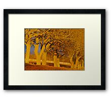 Evening glow trees Framed Print