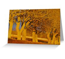 Evening glow trees Greeting Card
