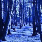 Blue Woods by Ulla Vaereth