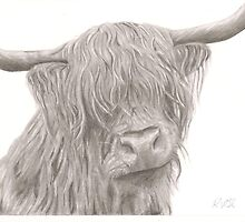 Highland Cow by RebeccaVose